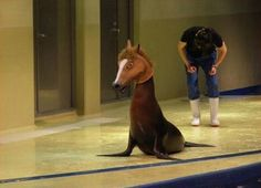 Funny pictures about A seal with a horse mask. Oh, and cool pics about A seal with a horse mask. Also, A seal with a horse mask photos. Humor Animal, Funny Animal Memes, Funny Animal Pictures, Random Pictures, Animal Pics, Funny Gifs, Funny Photo Captions, Cute Animals With Funny Captions, Funny Photos