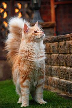 #gatti all'erta.