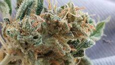 #edibles420 #maxmedibles #mediblesedibles #marijuanaedibles #marijunanamunchies #edibletreats #marijuanamedicine #cannapeople #cannabutter #cannabis420 #cannabismovement #cannabiscommunity #cannabinoid #ediblesesh #yum #yummy #StPattysDay #Legalize #Cannabis #Weed #Marijuana #Hash #Dabs #Edibles #Concentrate
