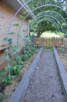 Pvc On Pinterest Pvc Pipes Arches And Grape Arbor