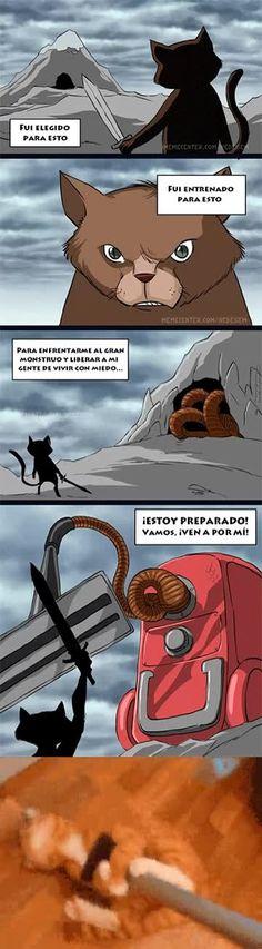El peor enemigo de un gato
