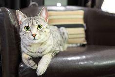 Czy kot jest fałszywy?