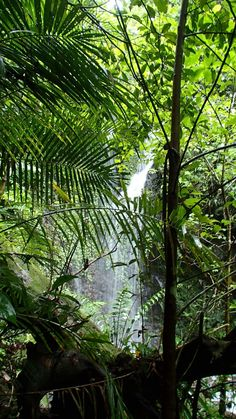 2 posts published by Chris Rouen during April 2013 Queensland Australia, Countries Of The World, Homeland, Plant Leaves, National Parks, To Go, The Incredibles, Explore, Adventure