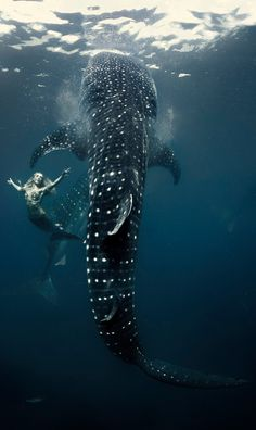 ⋆¸.•*♥ Once Upon A Time ♥*•.¸⋆ there lived a mermaid & her whale