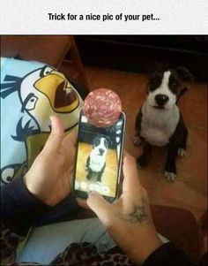 Well, that's one way to get a good picture of your dog! Funny Animal Pictures of The Day – 27 Pics Funny Animal Pictures, Funny Animals, Cute Animals, Funniest Pictures, Random Pictures, Dog Pictures, Dog Memes, Funny Memes, Jokes