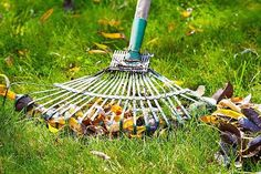 Early Spring Lawn Care Tips | 1000 Fall Lawn Care, Lawn Care Tips, Lawn Care Companies, Pergola Pictures, Lawn Service, How To Make Smoothies, Yard Care, Green Lawn, Autumn Garden