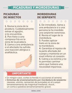 Infografía: Primeros auxilios - Prevencionar, tu portal sobre prevención de riesgos laborales.