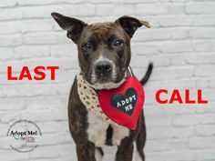 01/25/15 LAST CALL! LAST CALL! LAST CALL! Urgent Dogs of Miami · LOLA (A1668050) I am a female brown brindle and white Pit Bull Terrier mix. The shelter staff think I am about 4 years old and I weigh 50 pounds. I was found as a stray and I am https://www.facebook.com/urgentdogsofmiami/photos/pb.191859757515102.-2207520000.1420038885./899545356746535/?type=3&theater