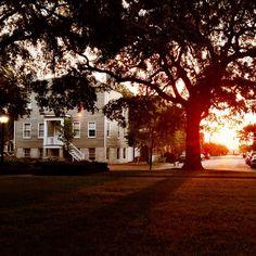 Sunrise view from Savannah's Greene Square. Photo Credit: @Visit Savannah