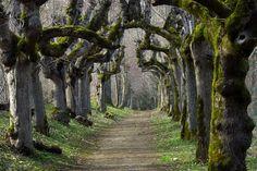 Schloss Warthausen, Baden-Württemberg, Germany  Wonderful Willows by Katzilla13