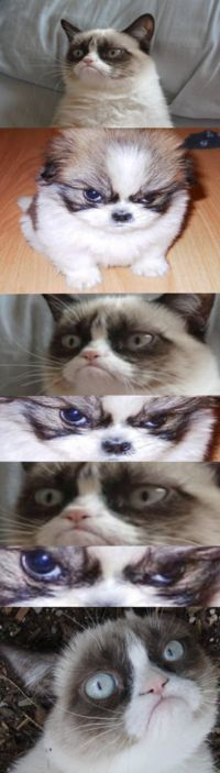 Grumpy Cat lost?? How? And to a DOG?!