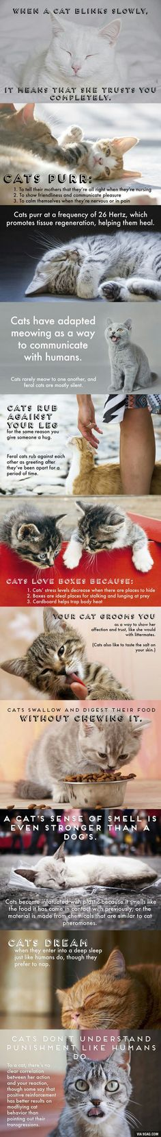 Facts about cats! Part 2 - 9GAG