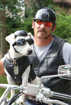 'He goes with me everywhere': Zeus, a Jack Russell terrier, rides on Plainwell…