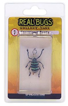 DeAgostini Real Bugs Curculionid Beetle Bug >>> Check out @