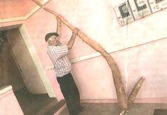 Agricultor colhe raiz de aipim medindo 2,94 mts.Veja em: www.comreno.wix.com/clubedebochaesbornia