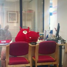 Dragon hard at work in the Cardiff University PR Office yesterday...