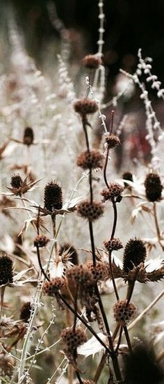 mycountryliving: (via Pin by Marju Stenberg on ✿ ✿ Hello Autumn ♥ ♥ | Pinterest)