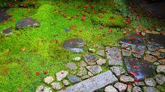 真っ赤な散紅葉に彩られた苔や石と石畳