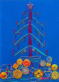 Diatom frustule arrangement (30x)