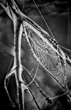 Telaraña, Tela De Araña, Spiderweb, Web, Araña