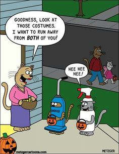 vacuums and spray bottles are 2 things cats are afraid of.funny.                                                                                                                                                                                 More