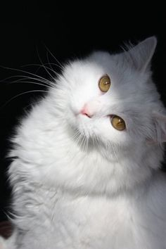 very partial to all white cats too.  had one once like this but with one yellow eye and one blue eye.  his name was storm