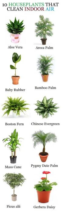 10 Household Plants that clean indoor air