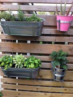 herbes aromatiques balcon, en jardinières métalliques gris argent et pot métallique rose vif