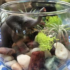 #terrarium #tillandsia #elephant #airplant Our fun project today!