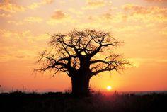 Rotas do Vento - Quénia, Tanzânia - Masai Mara, Serengeti, N'Gorongoro e Lago Vitória