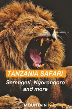 In Tanzania Safari Guide: North (classic safari): Serengeti, Ngorogoro Crater, Lake Manyara, Tarangire, South (less touristy): Selous Game Reserve, Ruaha West (chimp trekking): Mahale Mountains, Gombe, Katavi Important: Safari packing list, Best time to visit, Vaccination requirements, Safari safety Accommodation: Tanzania hotels, Serengeti hotels, Ngorongoro Crater lodge Activities: Wildebeest migration, Bballoon safari, Horse riding safari, Helicopter safari, Chimpanzee trekking Nature Photography, Travel Photography, Tanzania Safari, Kilimanjaro, Game Reserve, East Africa, Africa Travel, Horse Riding, Trekking