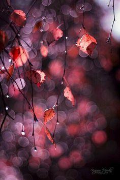Red Rose Flower Bud with Green Leaves Bokeh Background K Nature Bokeh Photography, Levitation Photography, Exposure Photography, Winter Photography, Abstract Photography, Photography Ideas, Fotografia Macro, Light Texture, Pics Art