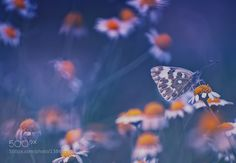 butterfly by charly74. @go4fotos