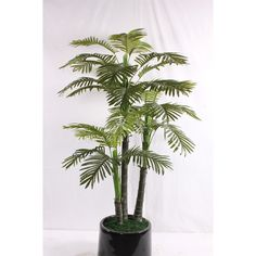 Artificial Riches and honour kwai Small Palm Trees, Small Palms, Plants, Plant, Planets