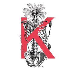 Κ #kappa #letter #skeleton #calendula #marigot #botanicalpainting #botanical #anatomy #design #graphicdesign #bnw #vintage #red #sansserif #sans