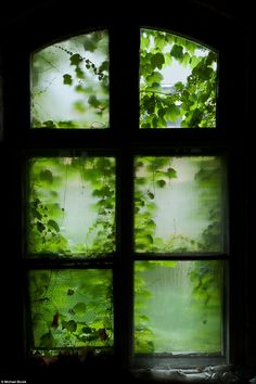 Green: The window above inside the factory shows how plants and trees have overtaken parts...
