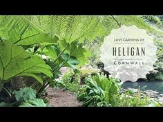 (31) The Lost Gardens of Heligan in Cornwall England - YouTube