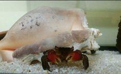 #crab #aquarium