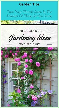 Get started with beginner organic gardening ideas! Most Beautiful Gardens, Amazing Gardens, Organic Gardening Tips, Garden Guide, Gardening For Beginners, I Am Awesome, Seeds, Outdoor Structures, Simple