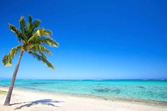 Paradise beach by dibrova. Paradise beach and palm tree in tropical island Living In Costa Rica, Tropical Beaches, Beach Scenes, Photo Effects, Beach Photos, Strand, Palm Trees, Beautiful Places, Paradise