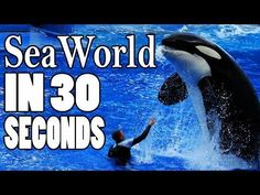Something Fishy About Florida Education Department's SeaWorld Promotions | Action Alerts | Actions | PETA