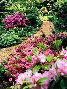 Use Flowering Shrubs for shade garden  Here, a variety of azaleas and rhododendrons provide a big spring punch, and their evergreen foliage keeps the garden looking good in winter.