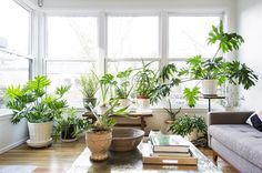 WSJ Real Estate on Instagram: Plants do so much for a room don't they? (: @billpurcell)...
