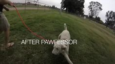 The Voice Of Animals Pariah (Pawfessor's Dog Training Journey Montage)