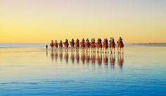 Broome, the Kimberley, WA  We don't know what it is about Cable Beach and sunsets, but it tends to bring out tourists on camel back. Strung out in single-file silhouette, they are a distinctive early evening feature of this stretch of Kimberley coast. No matter how clichéd you think the experience is as you sit here reading your mag, we defy you not to get swept up in the romance of the region and join a train when you next find yourself on Cable Beach.