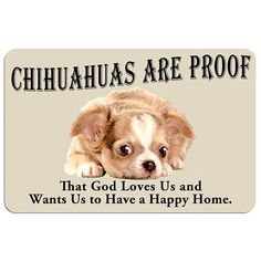 Chihuahuas Are Proof