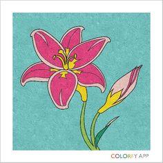Flower on paper