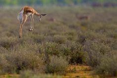 Animal dancing