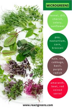 Growing Sprouts, Growing Microgreens, Vegetable Garden, Garden Plants, Container Gardening, Gardening Tips, Micro Herbs, Grow Your Own Food, Farm Gardens