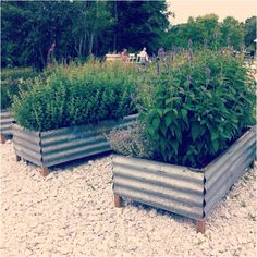 Recycled corrugated metal raised beds ..maybe painted a light color so the metal doesn't absorb too much heat and cook the plant roots.